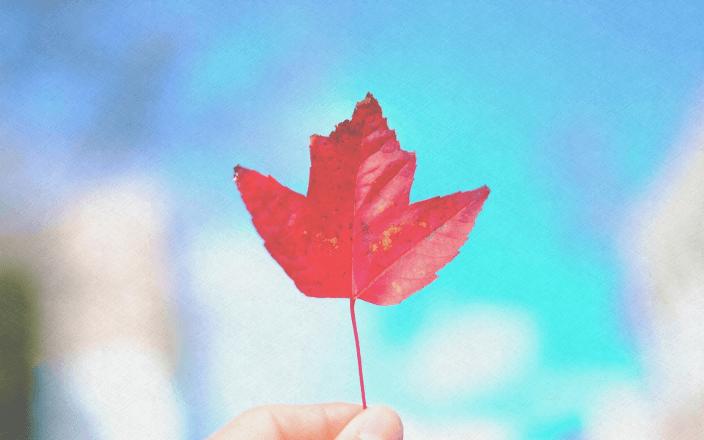カナダに移民する際に必要な英語力・資格ってなに?イメージ