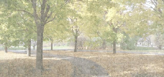 落葉が広がるカナダの公園