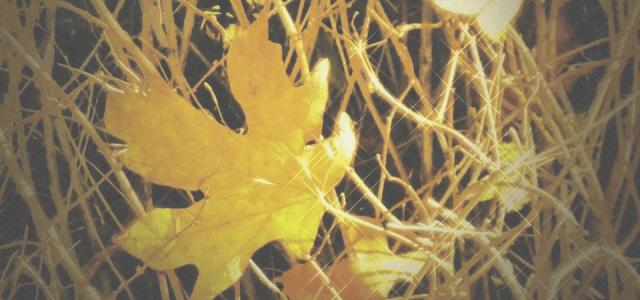 カナダの落葉樹