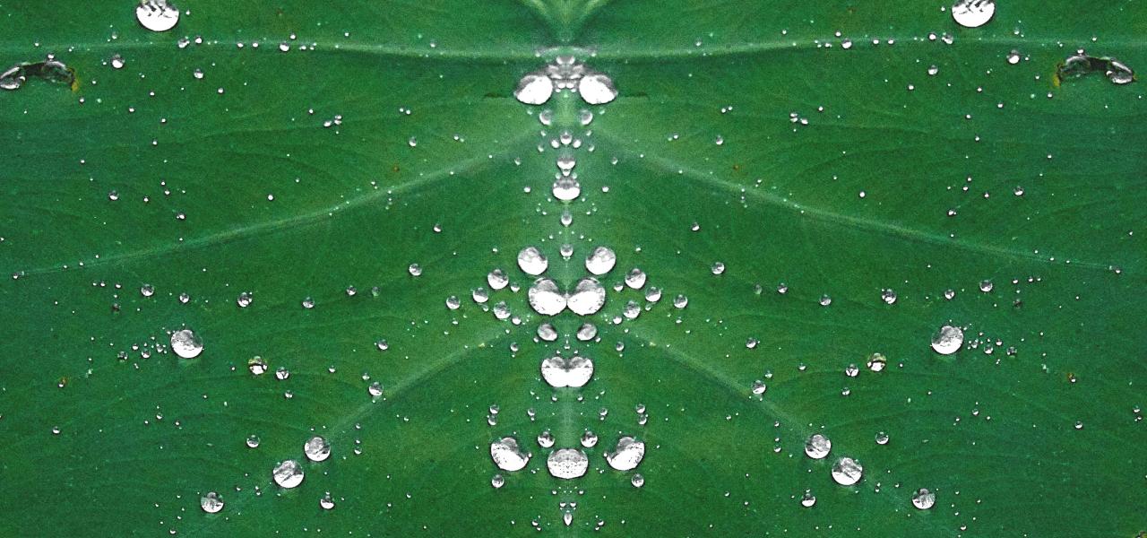 緑の葉の上に光る水