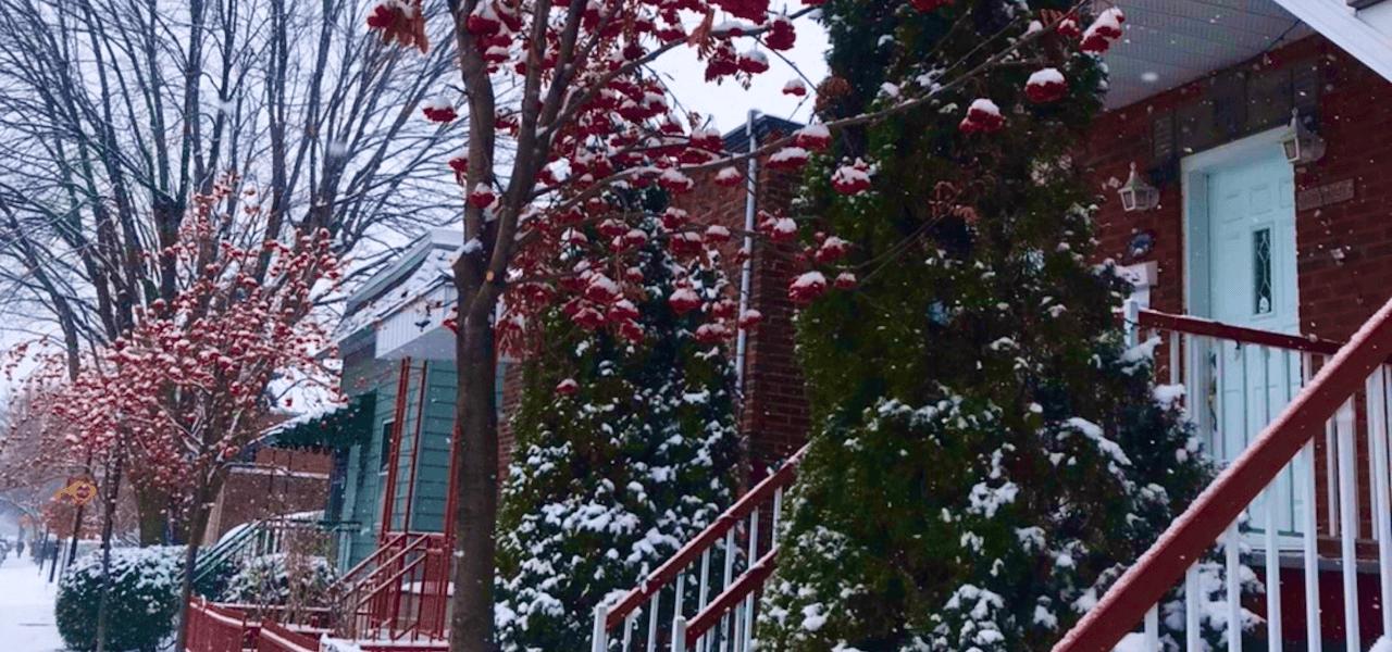 カナダの雪と木々の風景