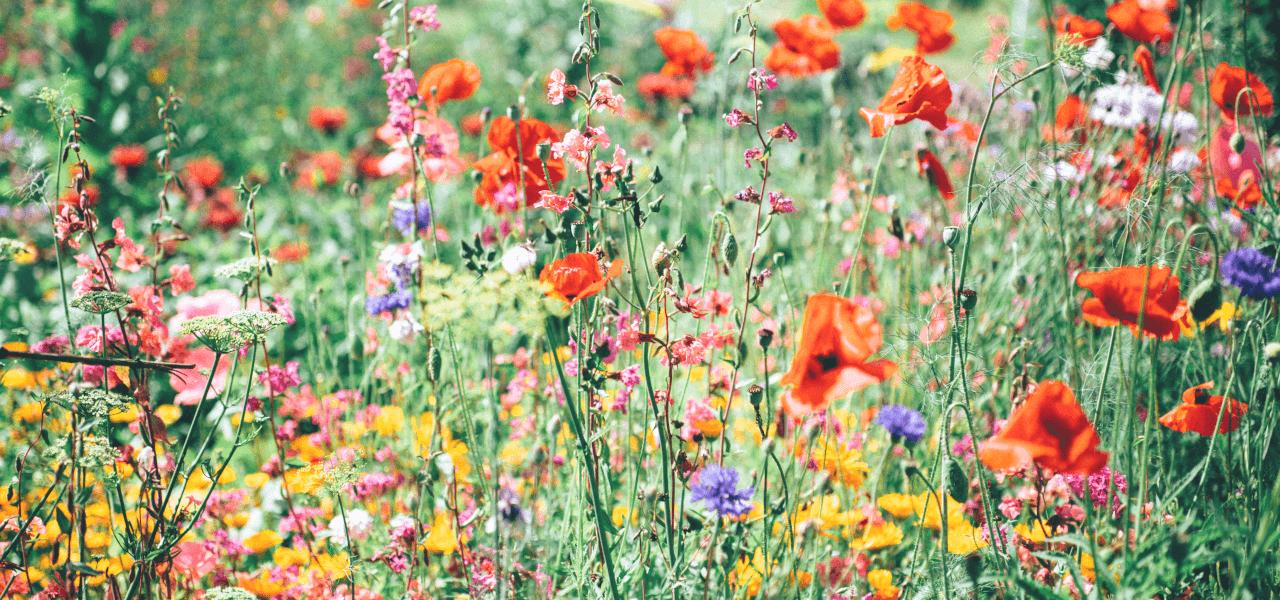 海外の色とりどりの花