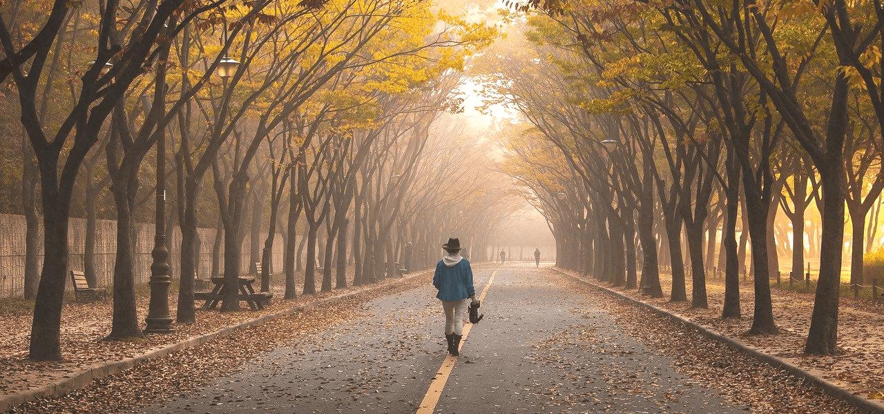 並木道を一人で歩く留学生
