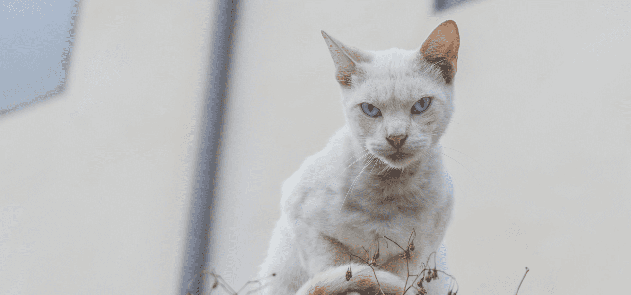壁際に座る猫