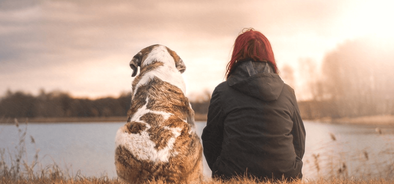 留学生と犬の後ろ姿