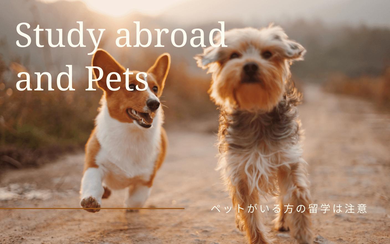 留学にペットを連れてく?ペット問題と寂しい現実。のイメージ