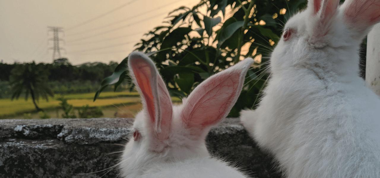 外の世界に飛び出したいウサギたち
