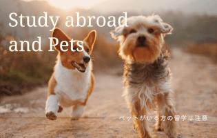 留学にペットを連れてく?ペット問題と寂しい現実。