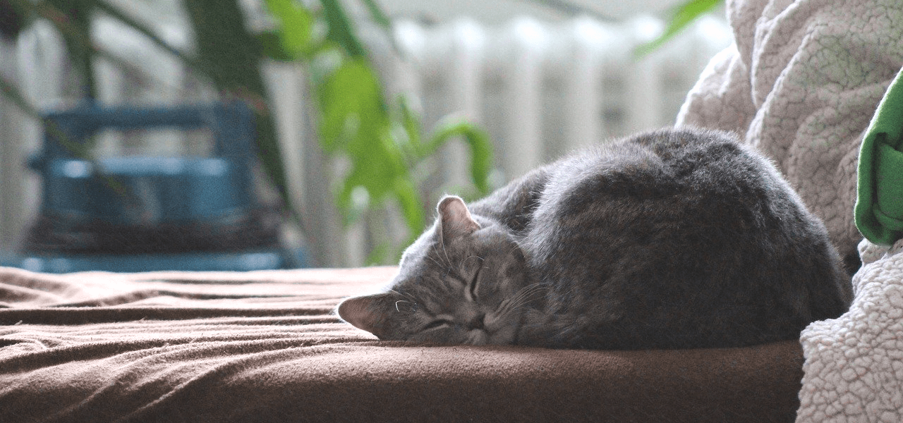 ベットで眠るネコ