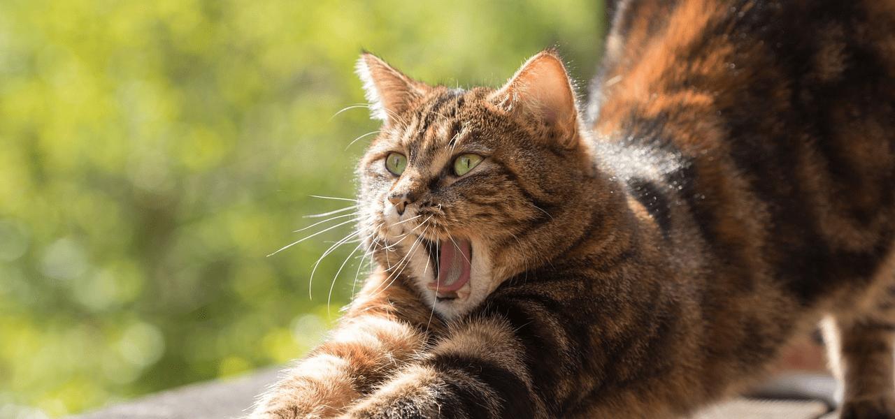 怒っているイメージを示す猫