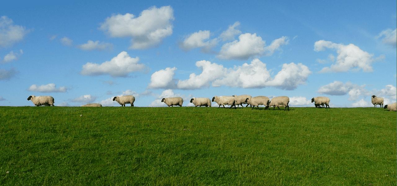 羊たちが散歩している海外の風景