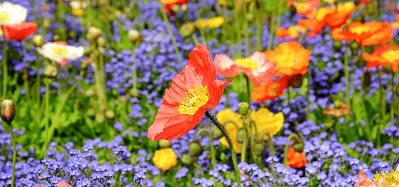 綺麗に咲いている花