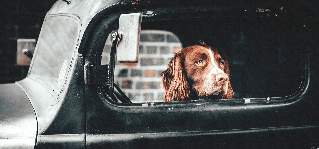 車から外を眺める海外の犬