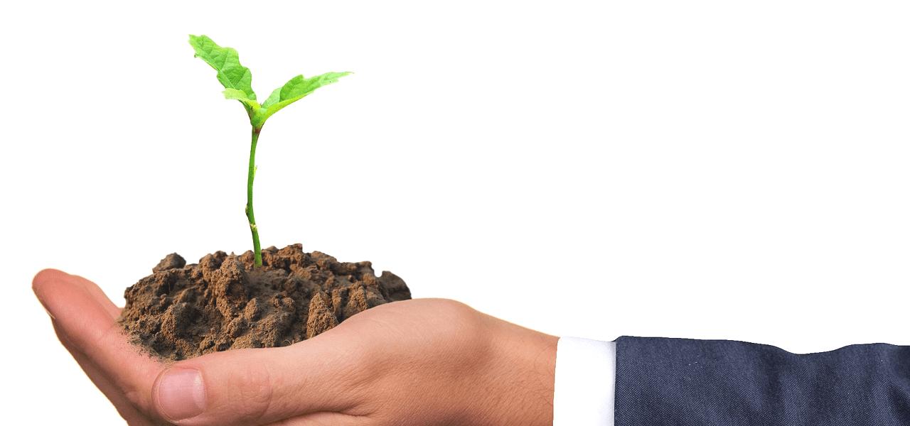 植物の新芽を持っている海外の社会人