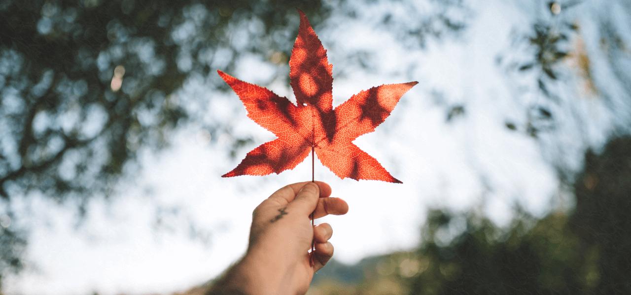 カナダ名物のメープルの葉